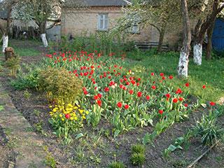 Цветы в селе Пуховка