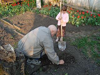 Кристина и дедушка Саша садят цветок
