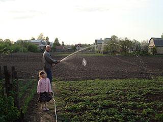 Поливаем клубнику на огороде в селе Пуховка